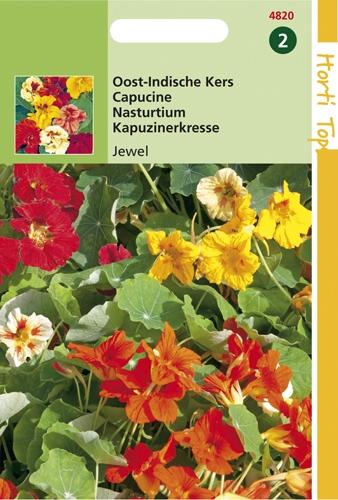 4820 HT Capucine Jewel  3 grammes