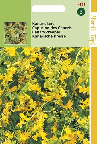 4825 HT Capucine des Canaris  2,5 grammes