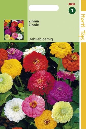 4860 HT Zinnia à fleur de Dahlia  1,5 gramme