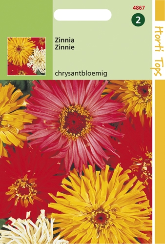 4867 HT Zinnia Chrysantbloemig1,5 gram