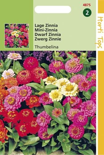 4875 HT Lage Zinnia Thumbelina 0,75 gram