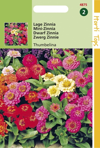 4875 HT Zinnia à fleur de Dahlia  0,75 gramme