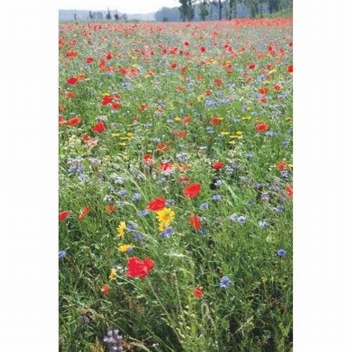 866610 Wildbloemen Een en Meerjarig  50 gram 100m2