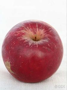 Appelboom  'Rode Jonathan'