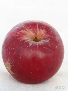 Apple 'Red Jonathan'