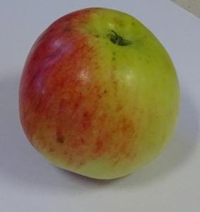 Appelboom  'Jamba 69'