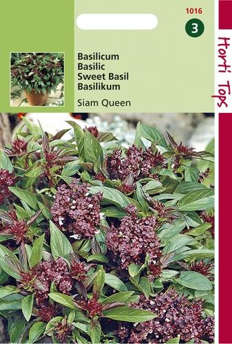 1016 HT Basilicum Siam Queen 0,2 gram