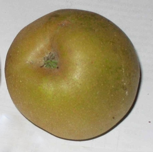Apple 'Graue Herbstrenette'