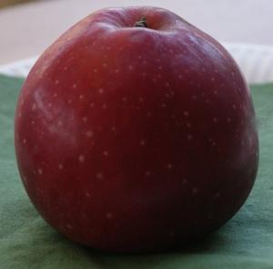 Pommier 'Roter Eiserapfel'