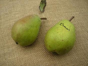 Pear 'Beurre Dumont