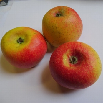 Apple 'Court-Pendu'