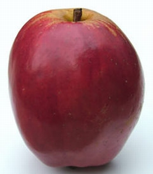 Appelboom  'Tulpappel'