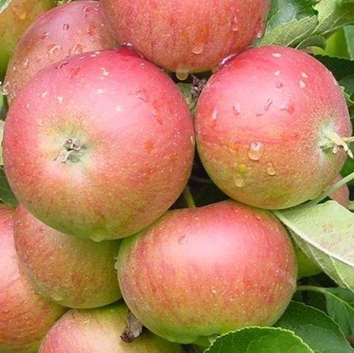 Appelbomen (herfst)