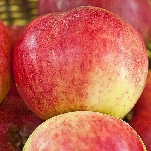 Appelbomen (zeldzame rassen)