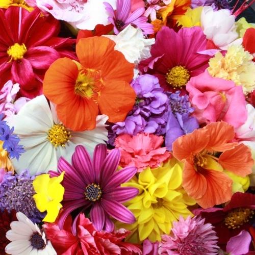 Bloemen zaden